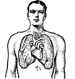 286x300 Lung Clip Art Download