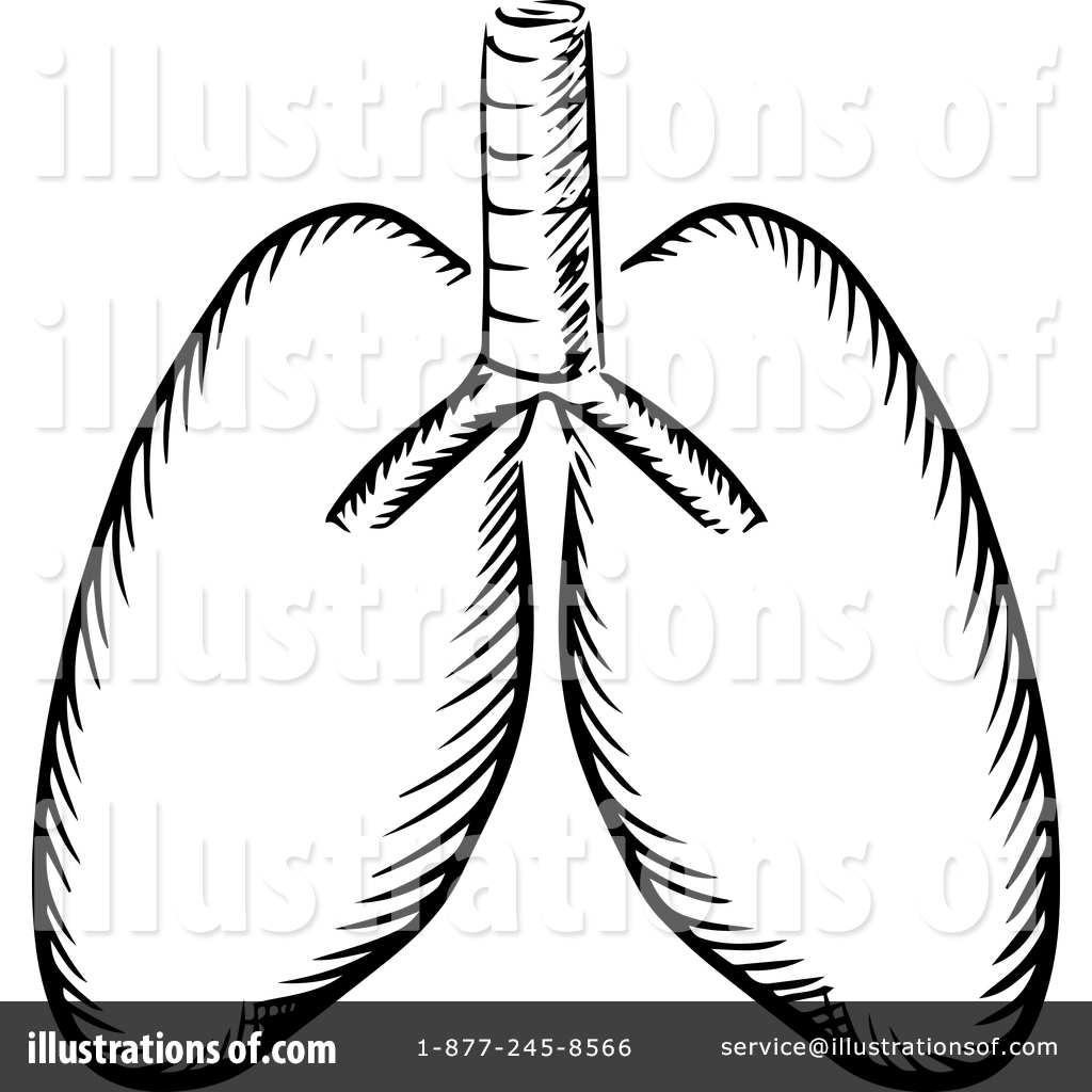 1024x1024 Lungs Clipart