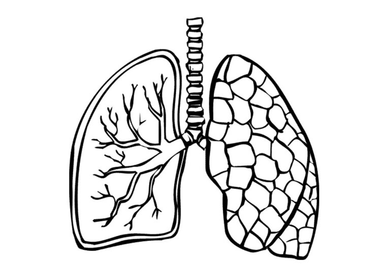750x531 Coloring Page Lungs