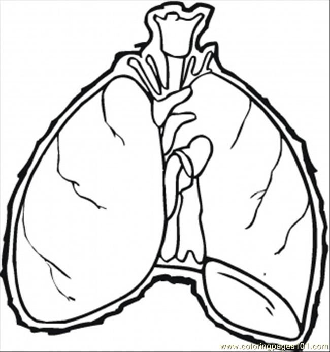 650x693 Lungs Coloring Page