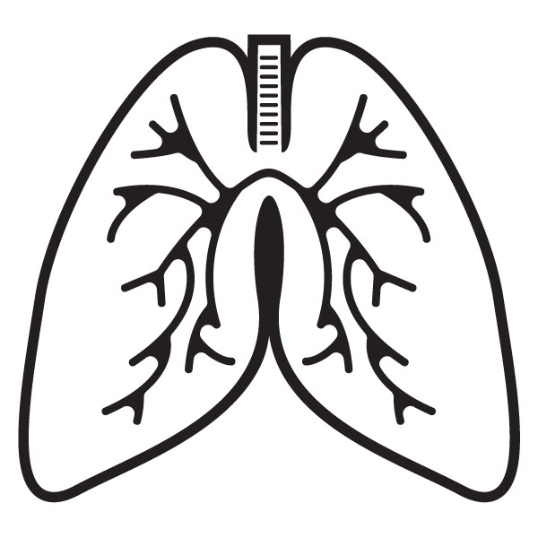 600x600 Lungs Outline Cliparts 229723