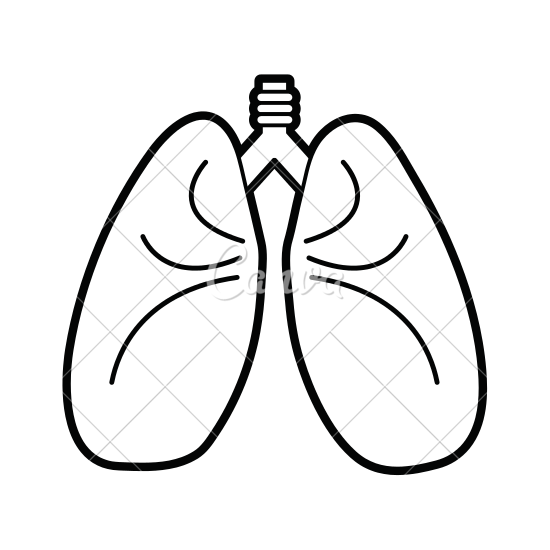 550x550 Lungs Vector Illustration