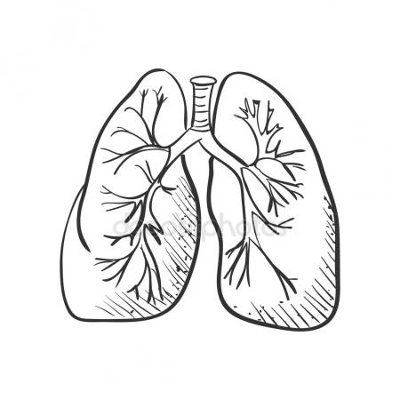 450x450 Lungs Draw Stock Vectors, Royalty Free Lungs Draw Illustrations