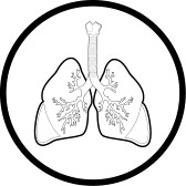 168x168 Vector Lungs Icon Black And White Simply Change Free Images