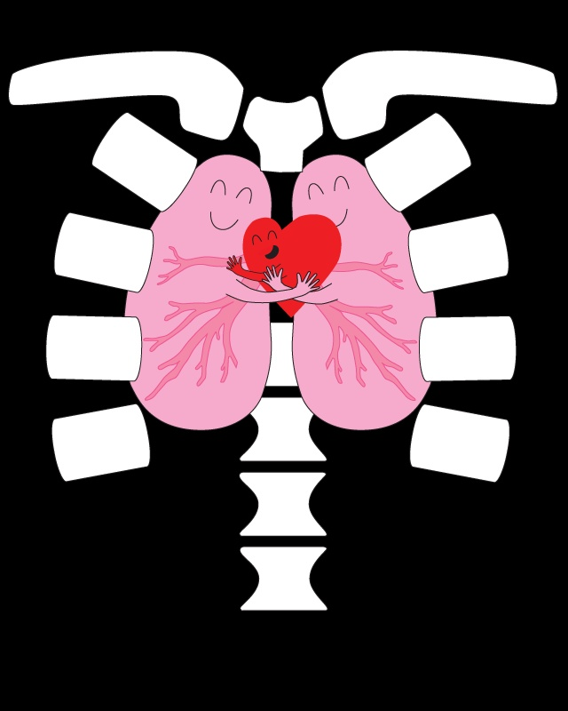 640x800 Expanded Lungs Clip Art Cliparts