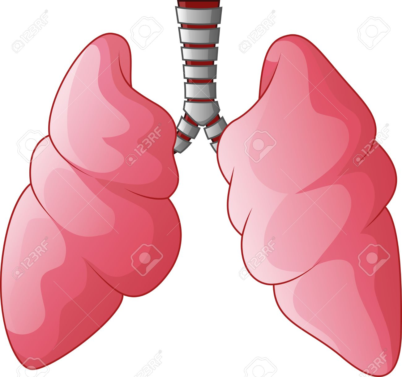 1300x1220 Human Lungs Respiratory Cartoon Royalty Free Cliparts, Vectors