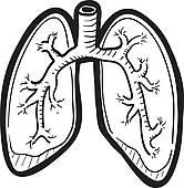 166x170 Lung Clip Art