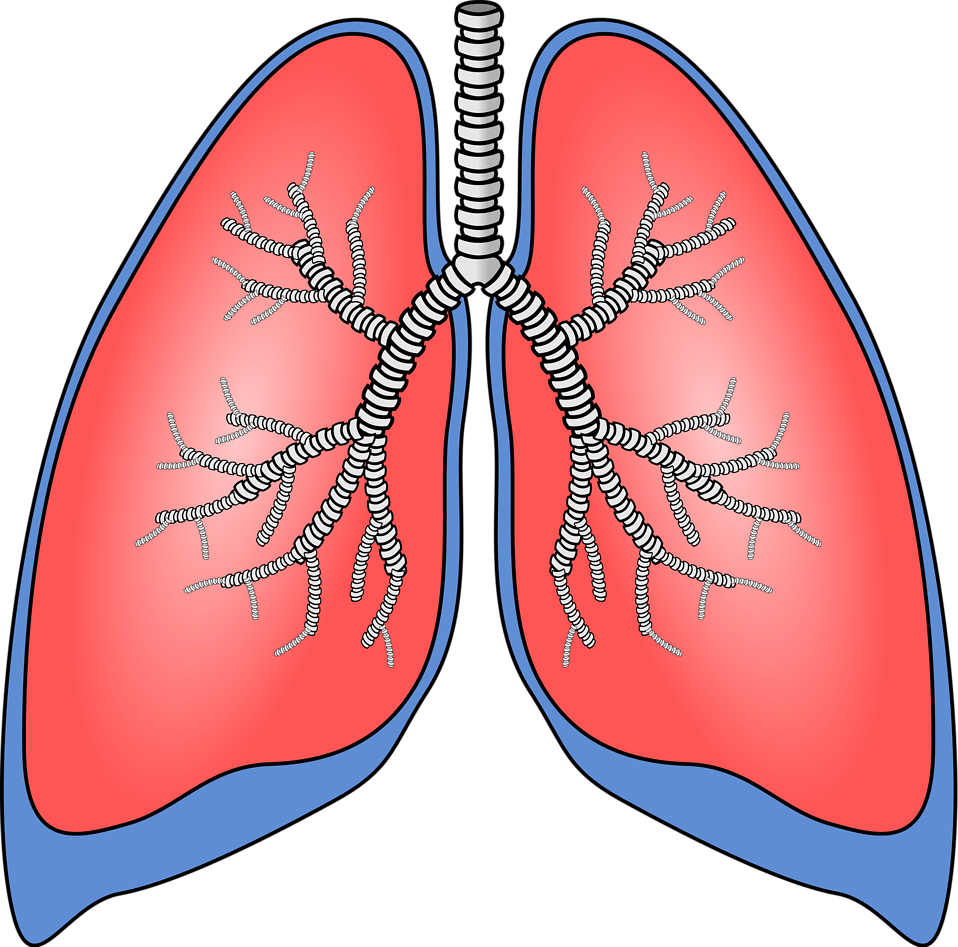958x947 Lung Damage Clip Art Cliparts