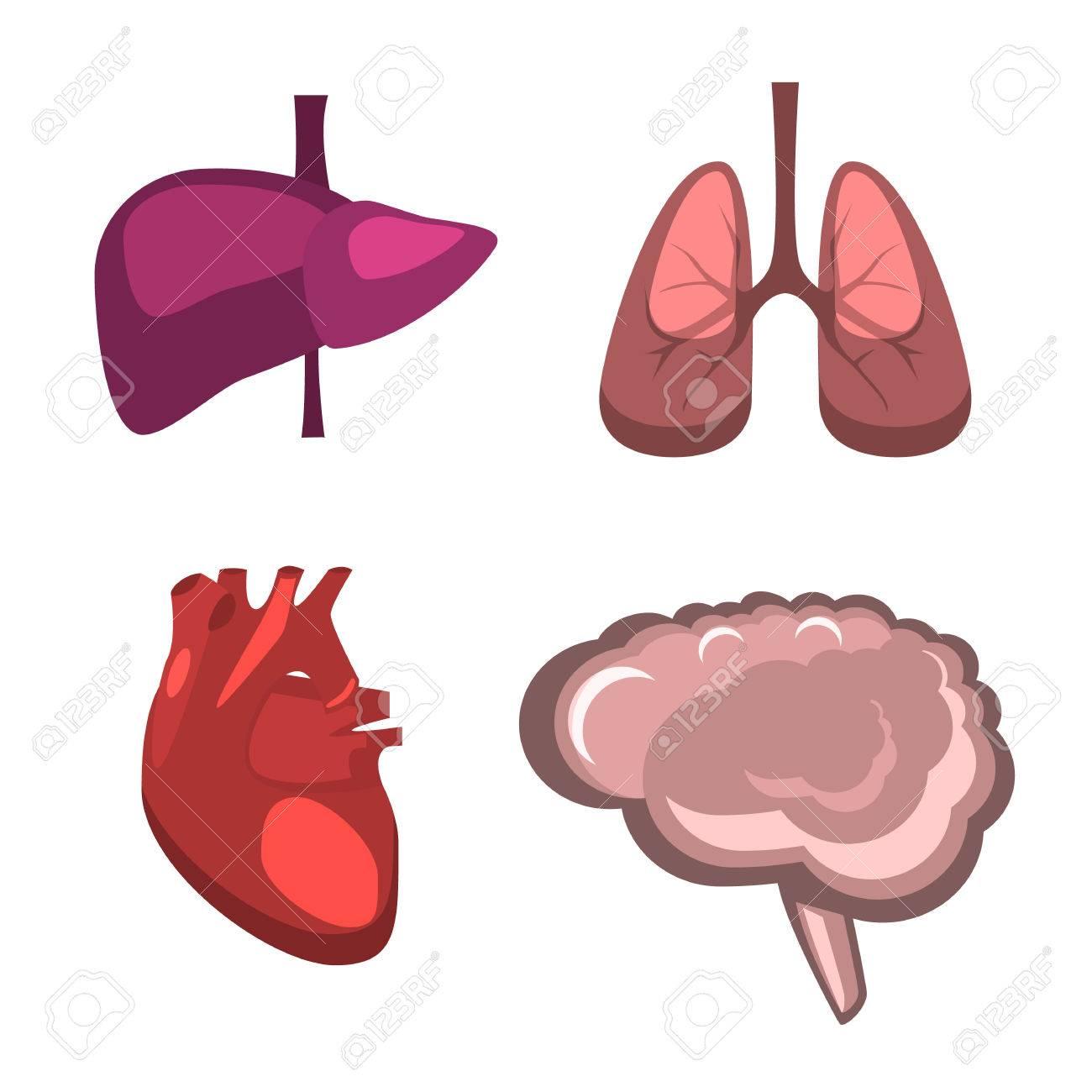1300x1300 Human Internal Organs Vector Flat Liver, Brain, Lungs, Heart