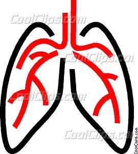 270x300 Human Lungs Vector Clip Art