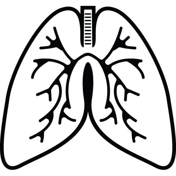 600x600 Lungs Anatomy Clip Art For Custom Medical Products Amp Gifts