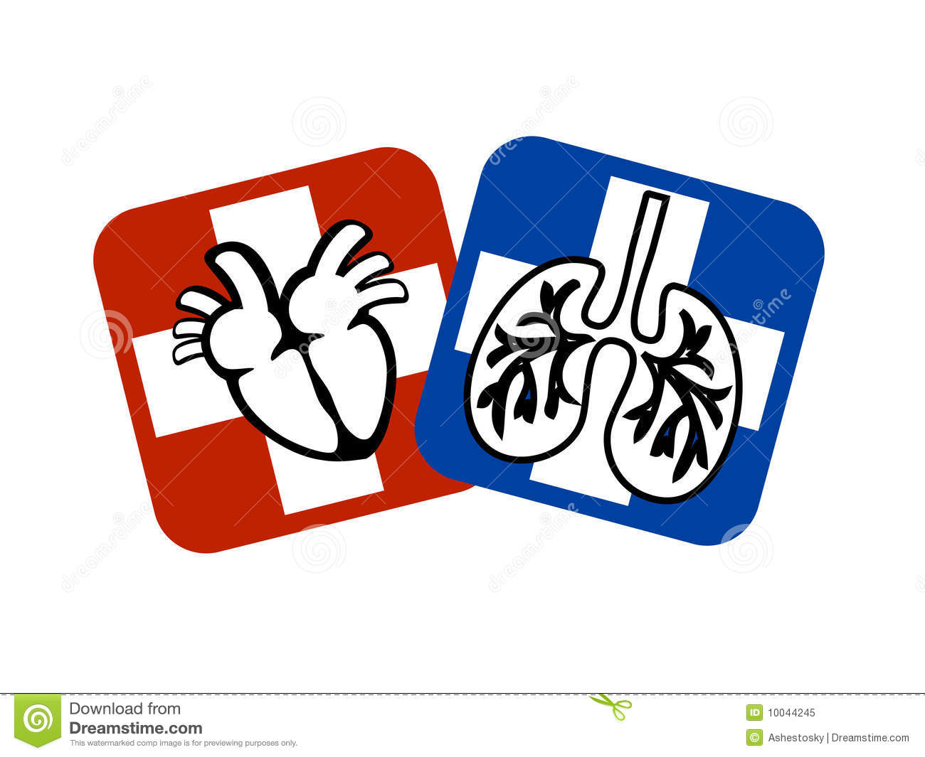 1300x1065 Lungs And Heart Clipart