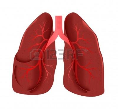 400x368 Lungs Art