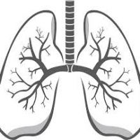 200x200 Lungs Clipart