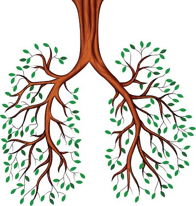 404x425 Tree Lungs Cartoon, Premium Clipart