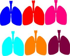 236x188 Lungs Clipart Bodies Lungs