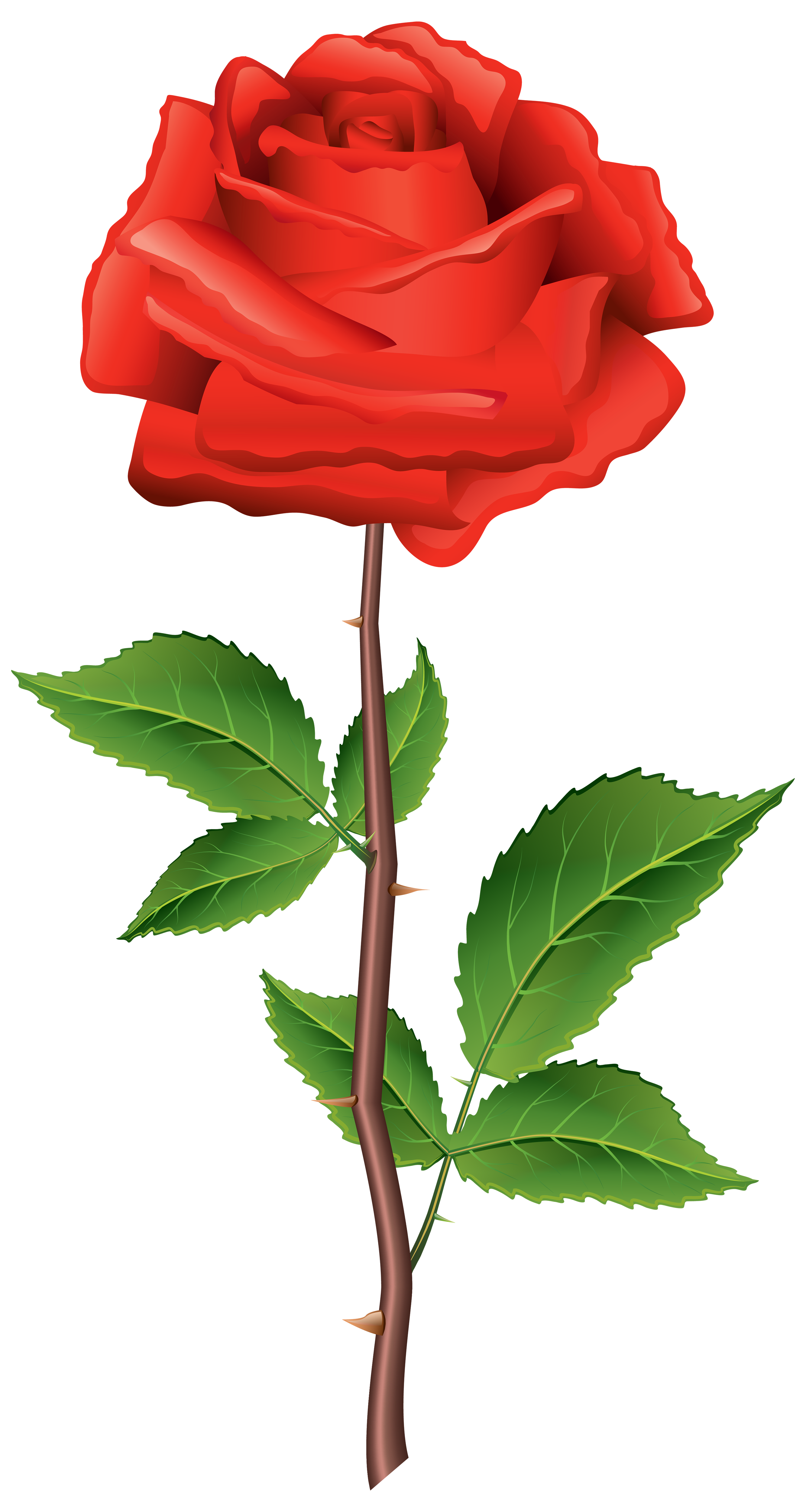 2667x5000 Beautiful Clipart Rose Flower