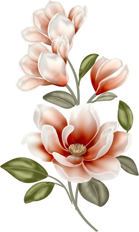 478x800 1155 Best Flowers Images Cricut Explore Air, Design