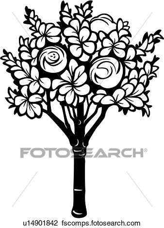 338x470 Clipart Of , Magnolia, Tree, Varieties, U14901842