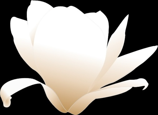 507x368 Magnolia Free Vector Download (10 Free Vector) For Commercial Use