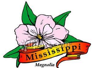 300x224 State Flower Of Mississippi, The Magnolia Royalty Free Clipart