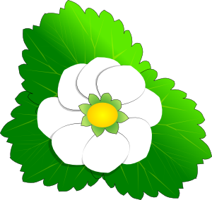 300x284 Strawberry Clipart Strawberry Flower