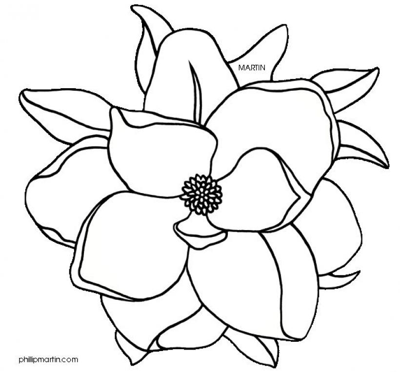 Magnolia Clipart Free Download Best Magnolia Clipart On Clipartmagcom