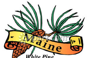 300x199 Flower Of Maine, The White Pine Cone And Tassel Royalty Free
