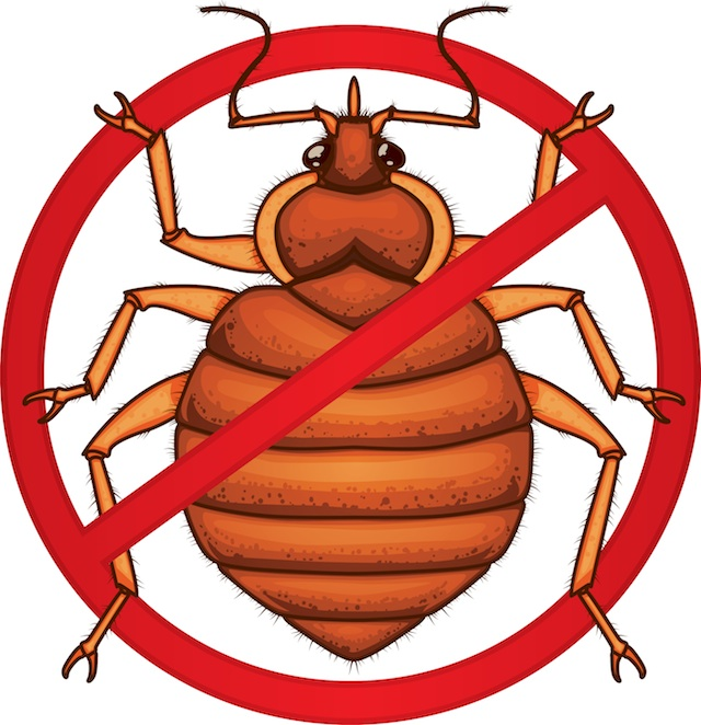 640x662 Bed Bug Prevention To Make Your House Healthy