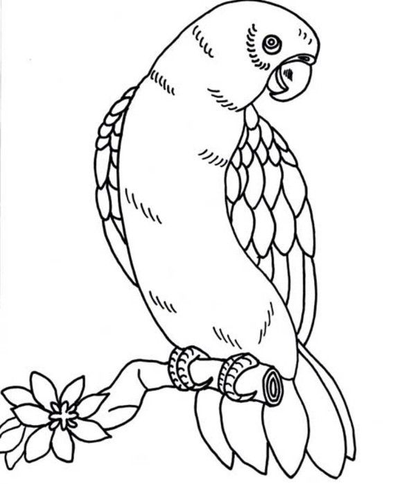 Manatee Coloring Page | Free download best Manatee Coloring Page on ...