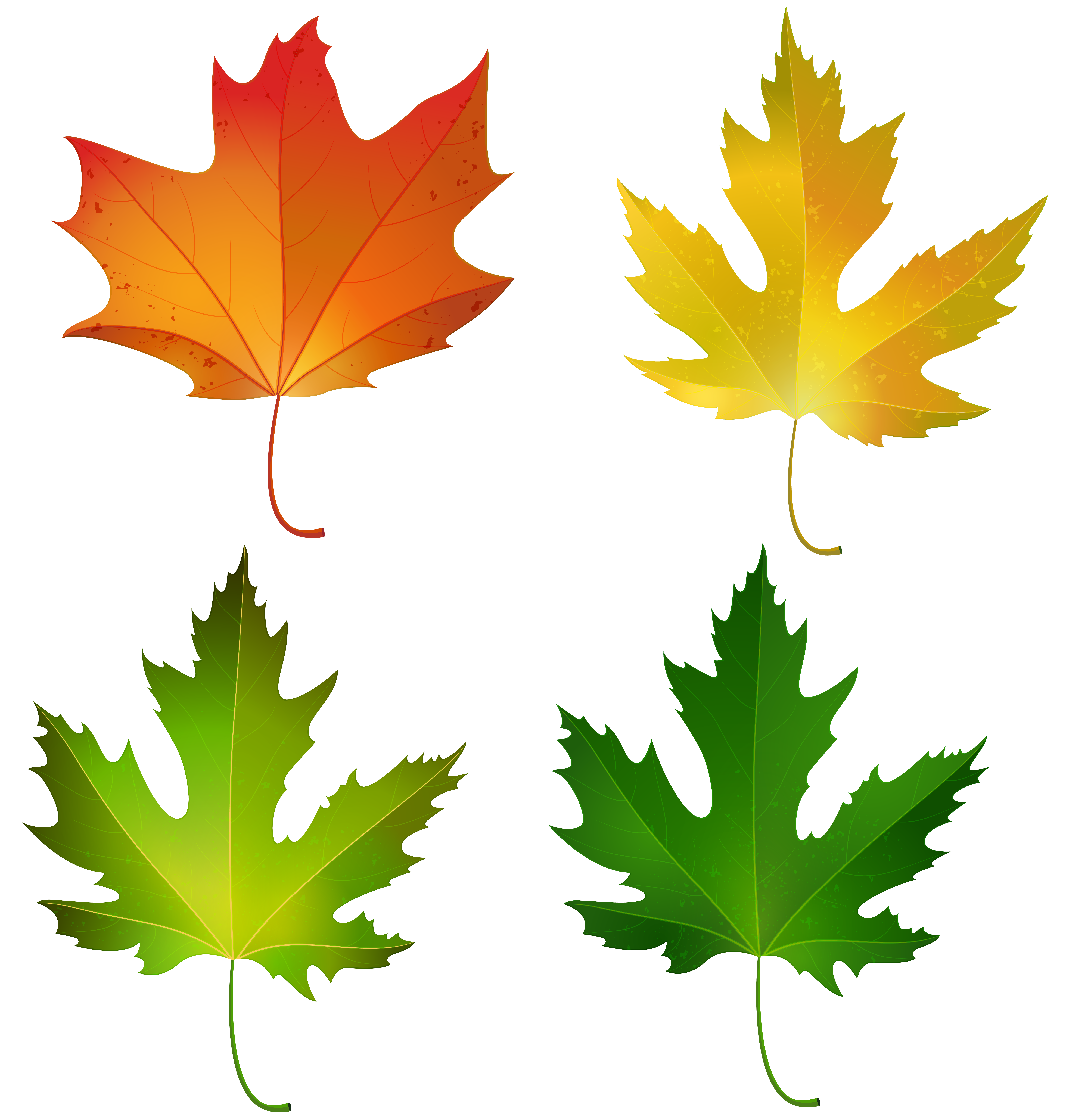 6053x6360 Fall Maple Leaves Set Png Decorative Clipart Imageu200b Gallery