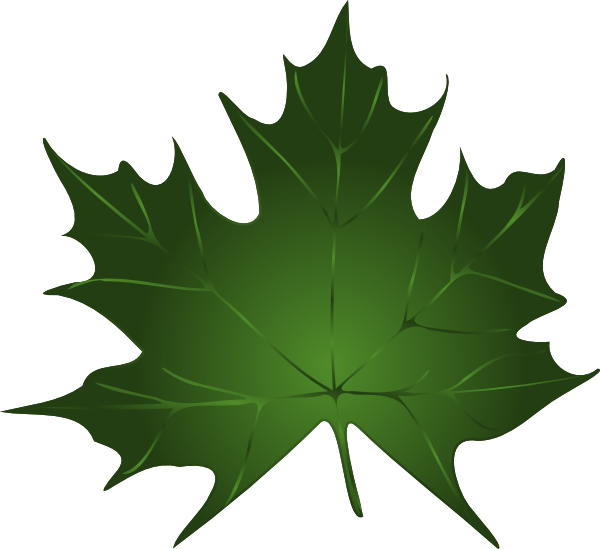 600x549 Green Maple Leaf Clip Art