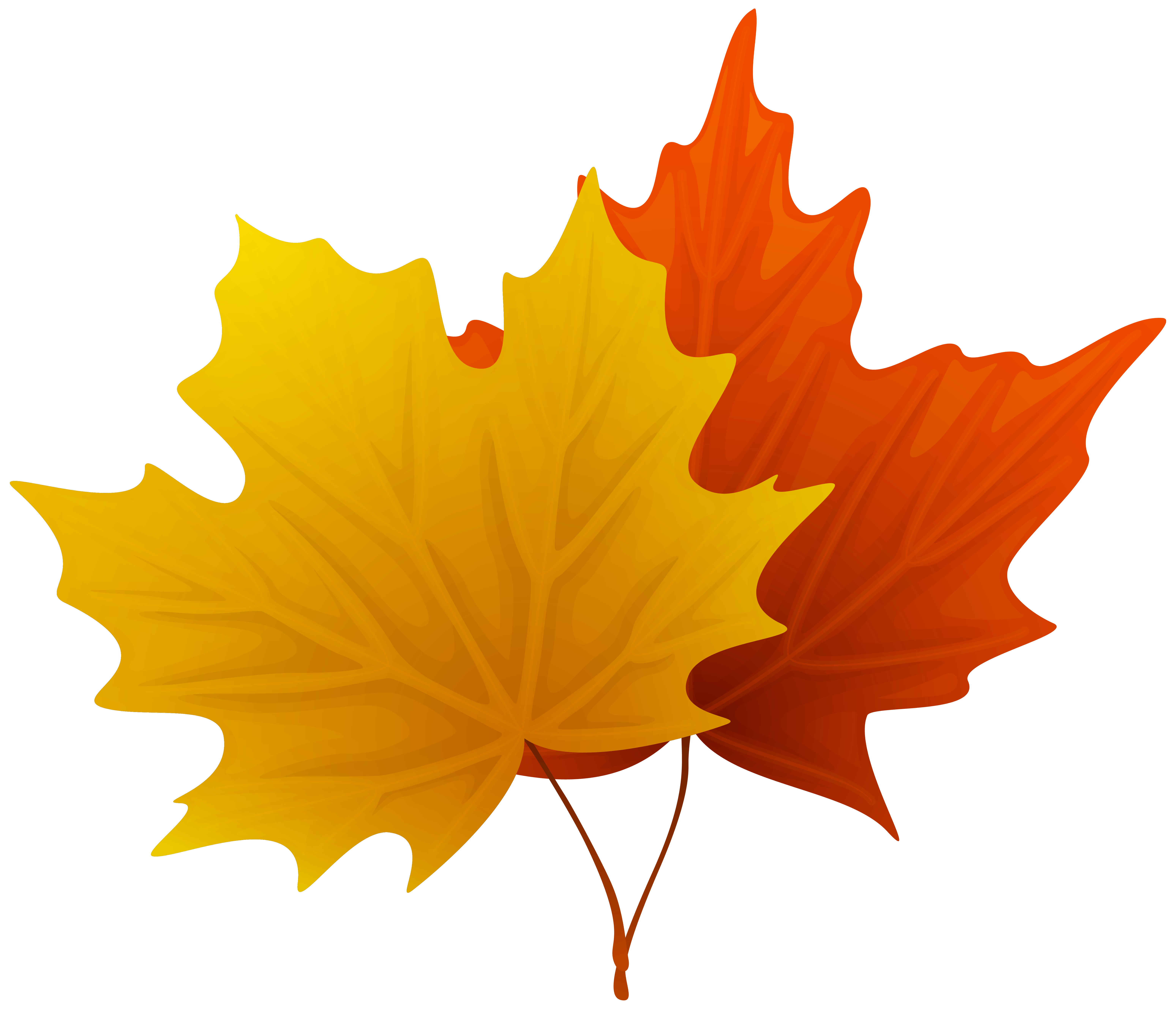 6194x5314 Maple Leaf Fall Maple Leaves Decorative Clipart Image