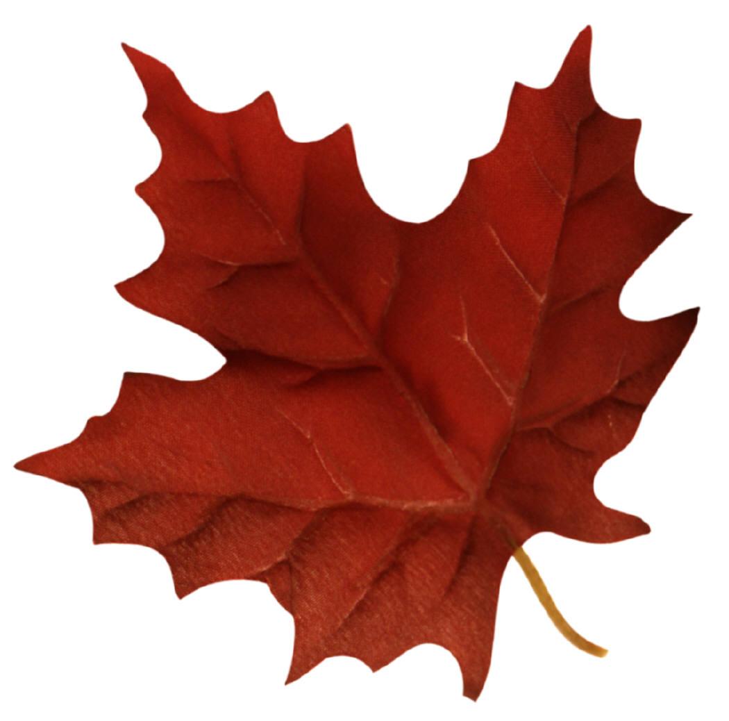 1050x1038 Maple Leaf Clip Art