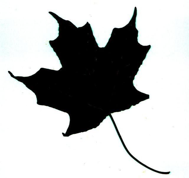 Maple Leaf Silhouette Clipart