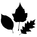 150x150 Leaf Vectors Images Amp Graphics