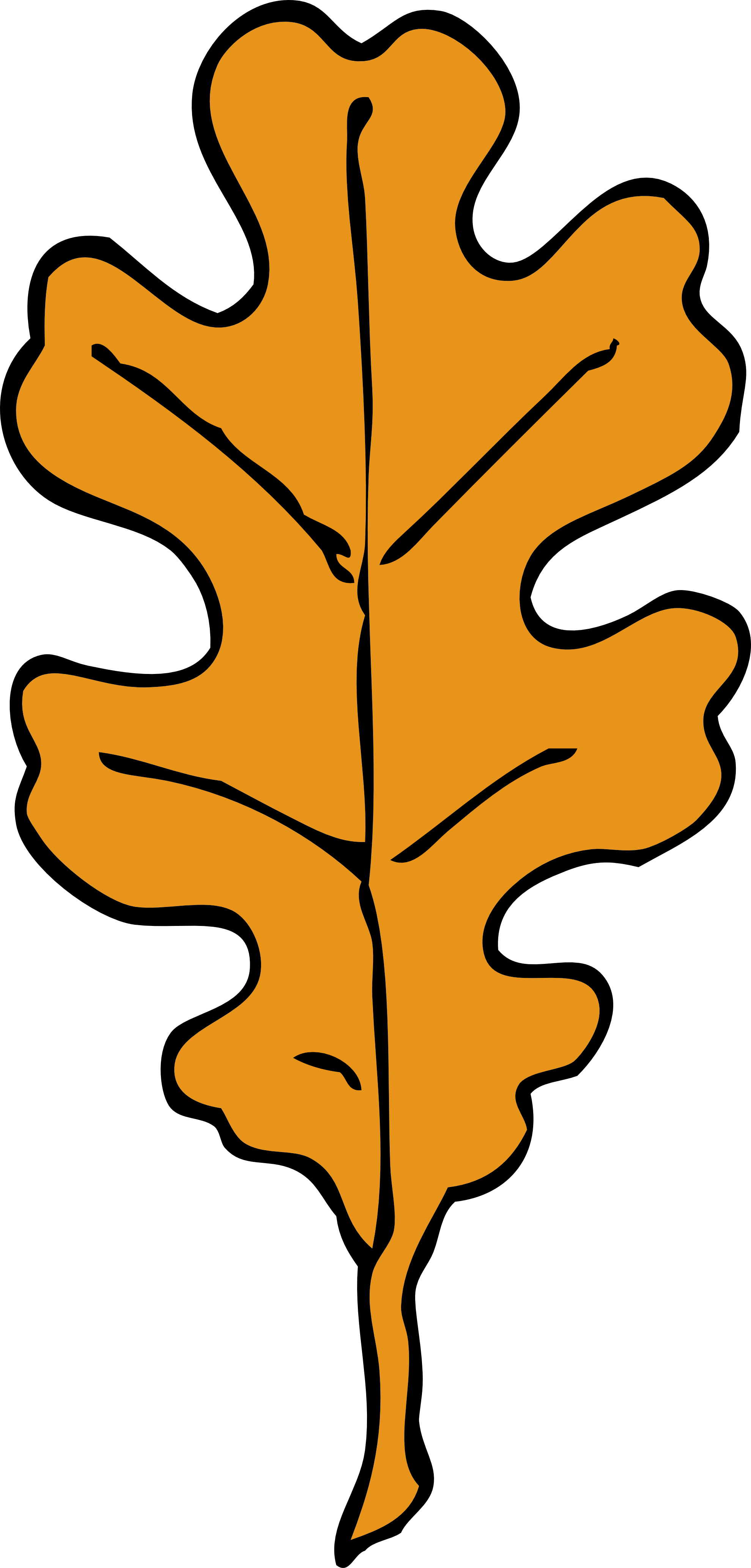 1979x4132 Maple Leaf Clipart Oak Leaf