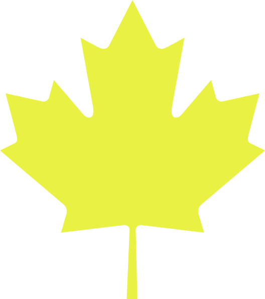 528x596 Maple Leaf Clipart Yellow