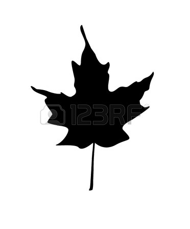 372x450 Silhouettes Of Maple Leaves Changing Color In Spring, Summer