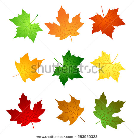 Maple Leaves Clipart