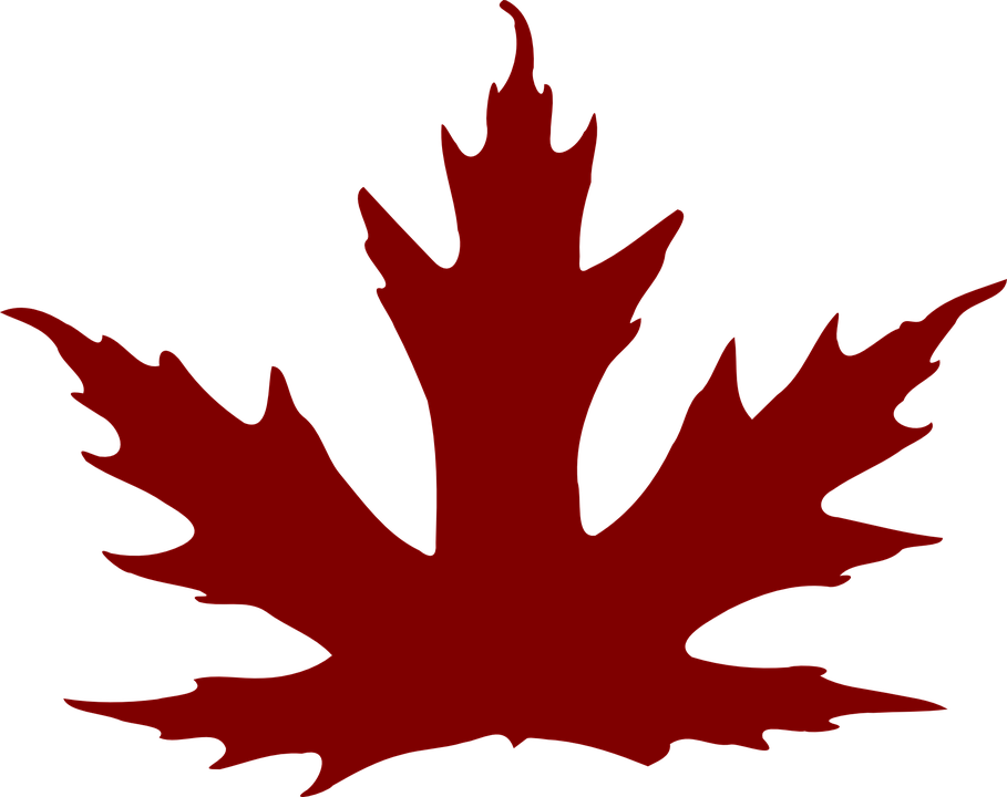 909x720 Maple Leaf Clipart Brown Maple