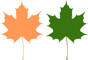 297x201 Maple Leaves Clip Art