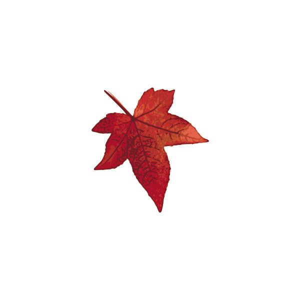 600x600 The Best Maple Leaf Clipart Ideas Maple Leaf
