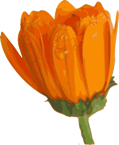 243x297 Flower Clip Art