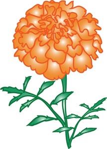 215x300 Marigold Clipart Image
