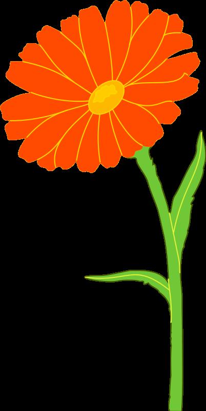 402x800 Marigold Flower Clip Art Cliparts