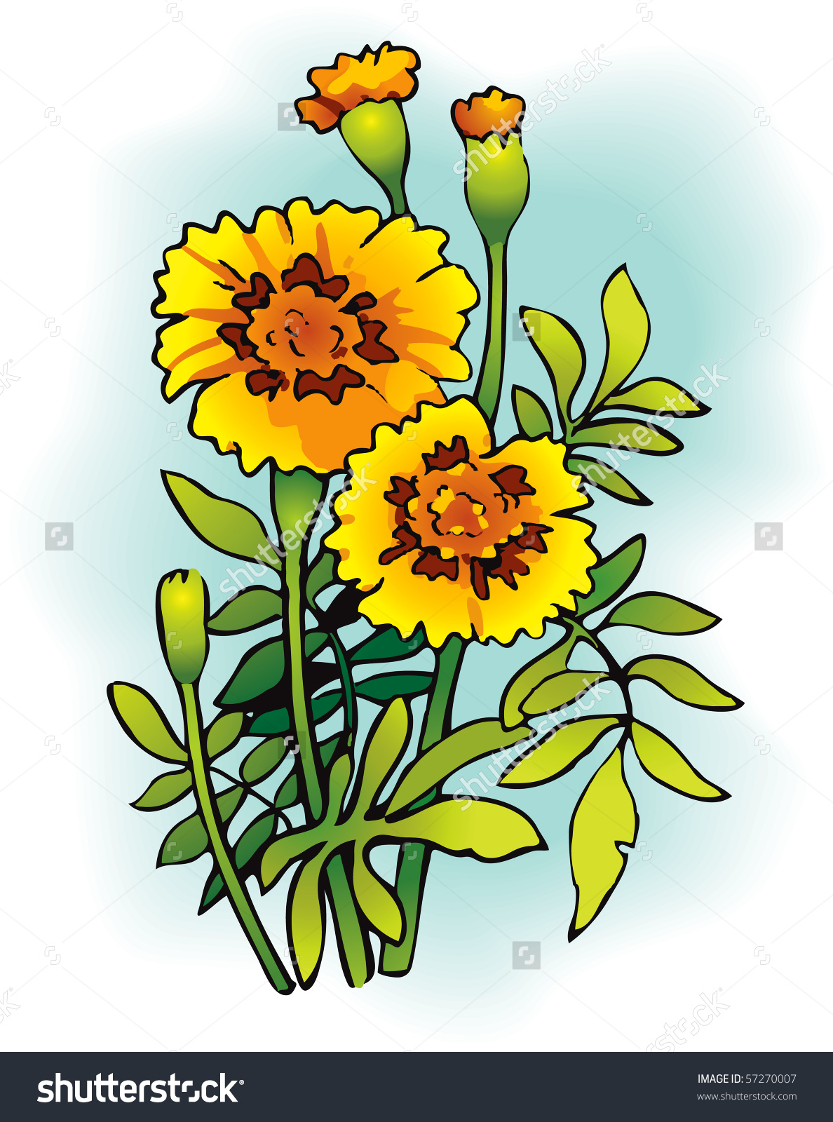 1188x1600 Tagetes Clipart