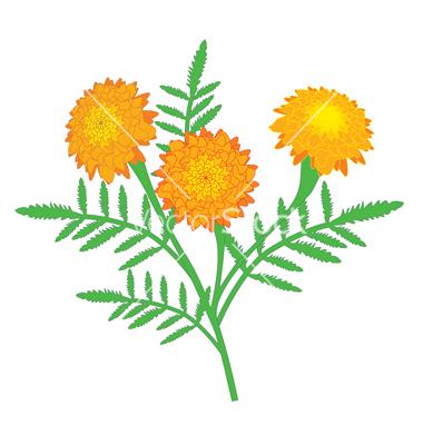 380x400 Yellow Marigold Clipart