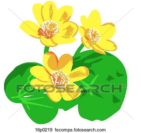 450x425 Clip Art Of Marsh Marigold 16p0219
