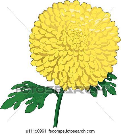 426x470 Clipart Of Chrysanthemum U11150961